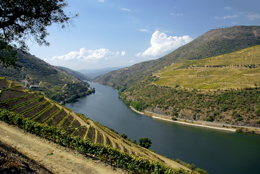 Portugal Douro Valley vinyards