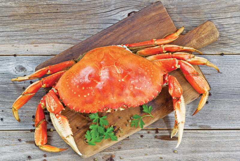 Dungeness Crab Oregon