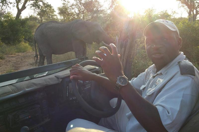 Driver and elephant Kambaku Game Lodge South Africa