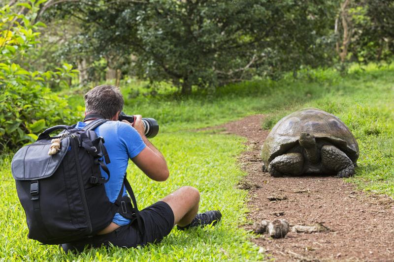 Galapagos tortise, South America