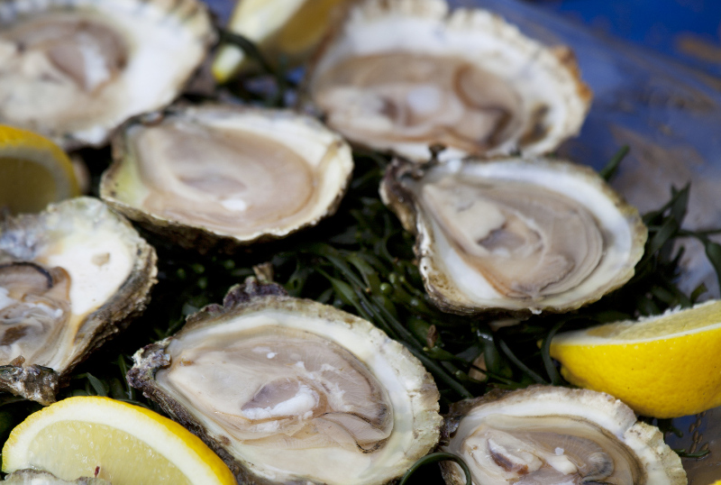 Galway oyster, Festival and Event Calendar