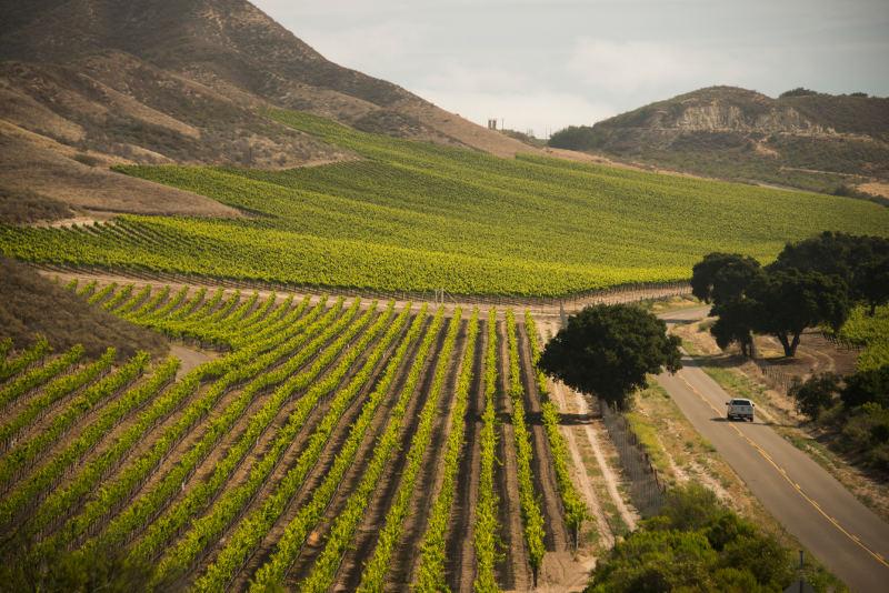 car driving through vineyards santa barbara