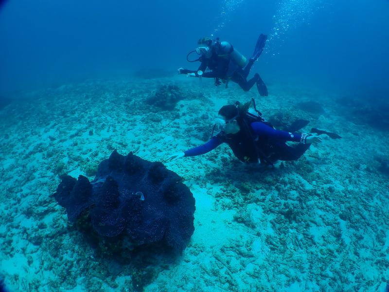 Giant clam Papua New Guinea