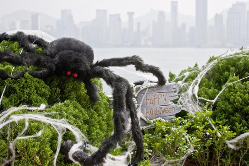 Halloween Spider Hong Kong