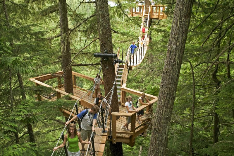 Walkway through tree canopy in Whistler