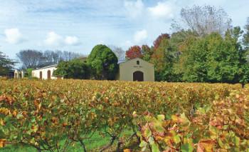 Kumeu River Winery