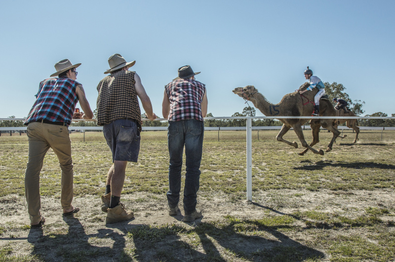 Camel racing Outback Queensland