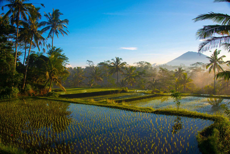 Balinese rice paddies with mountain in background