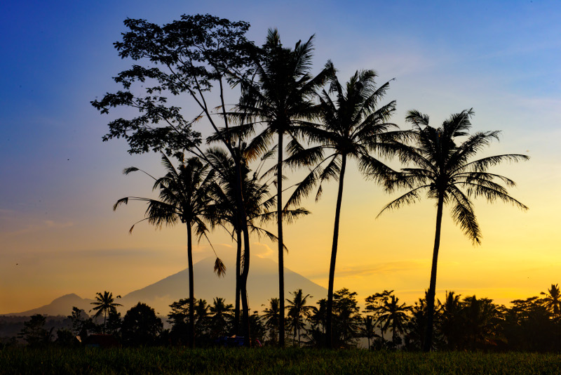 Palms silhouetted against mountain at sunrise