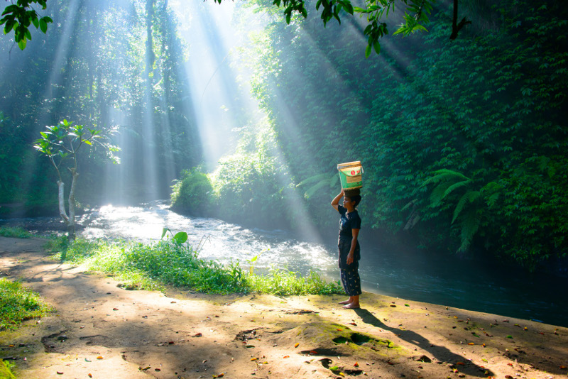 Sunshine through the trees in Balinese jungle