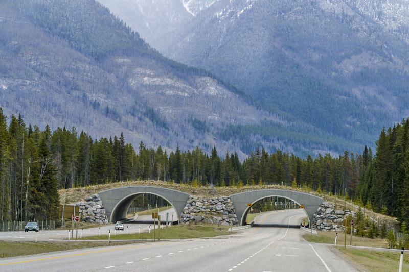Wildlife Corridors Lake Louise