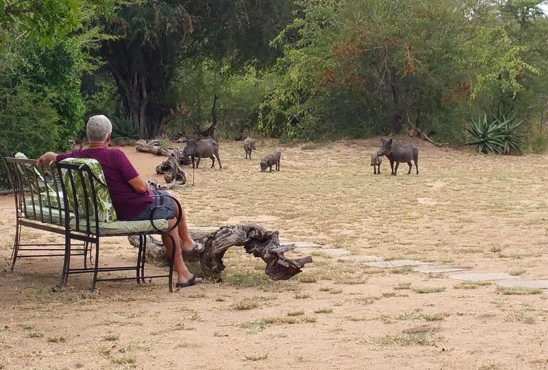 Wildlife Kambaku Safari Lodge South Africa