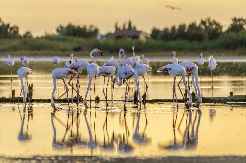 flamingos on ibiza
