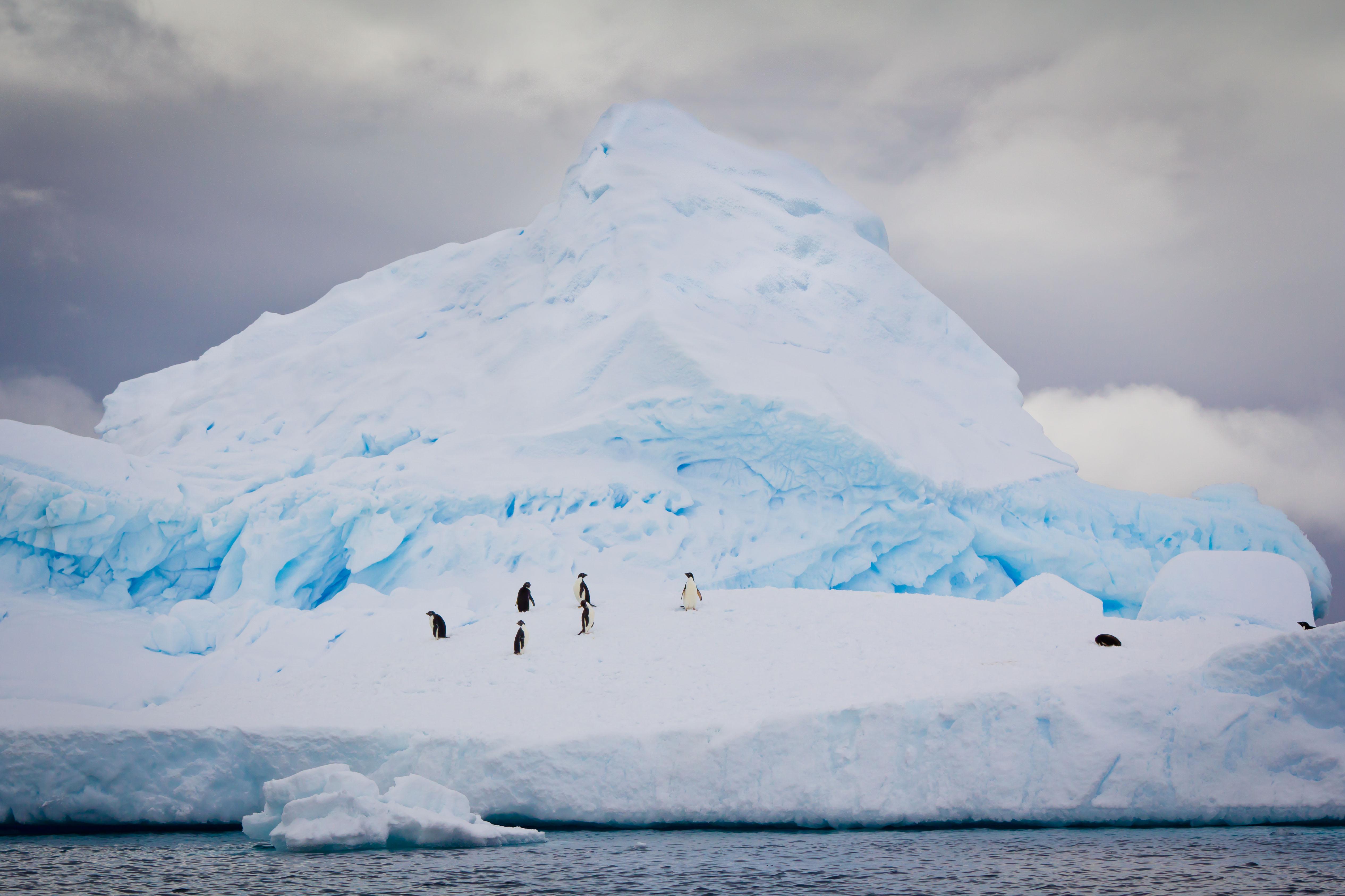 Scenic Tours 2916 Antarctica program