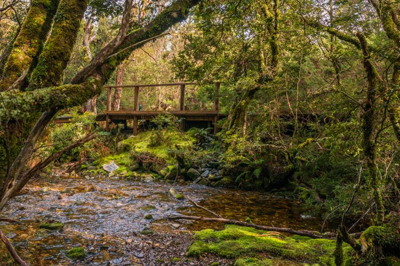 On the short trails around Peppers Cradle Mountain Lodge. Image: Mantra Group