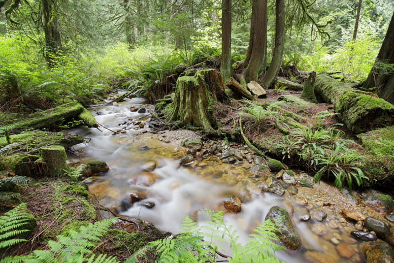 Rainforest creek on Vancouver Island