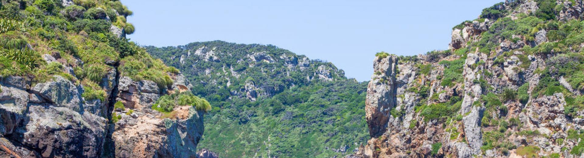 divingnz islands