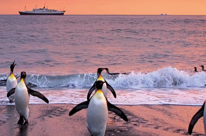 Penguin feature