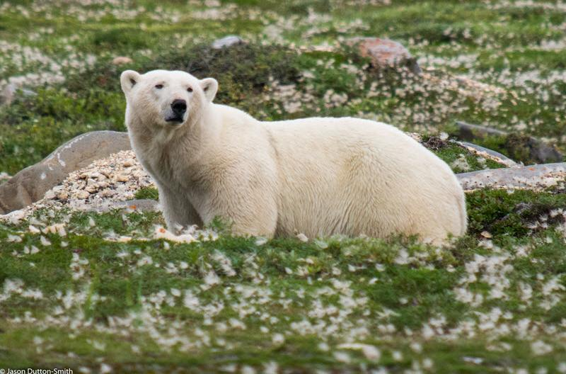 PolarBearRocksFlowers
