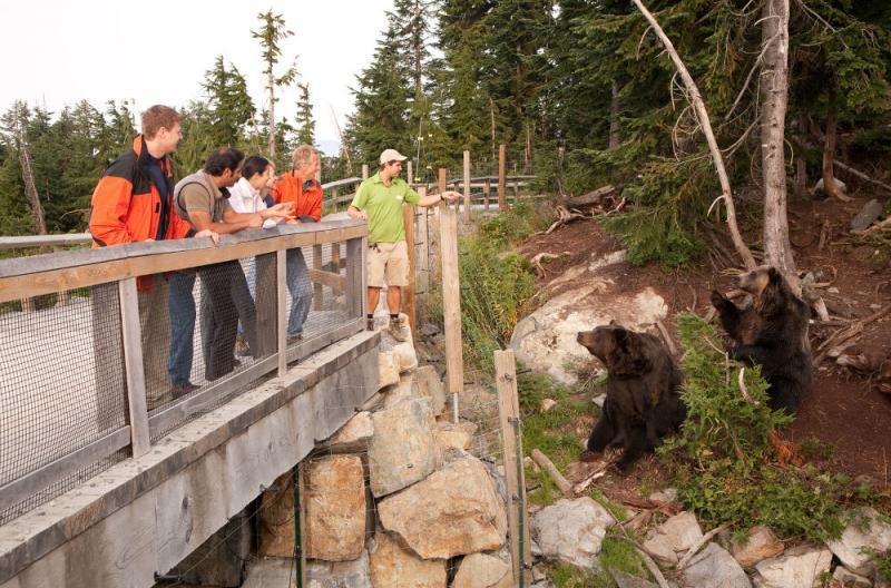vannature bears