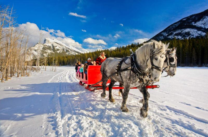 Winter Sleigh in the Snow