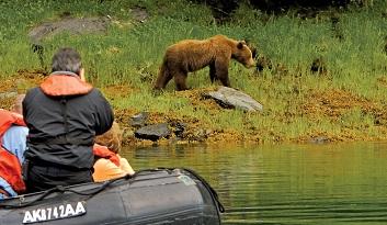 alaska Lindblad ALASKA Zodiac Bear