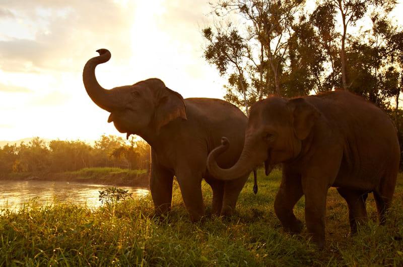 Anantara Golden Triangle Elephant Camp and Resort, Thailand