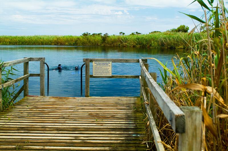 The Ewens Ponds deck entrance for snorkelling.