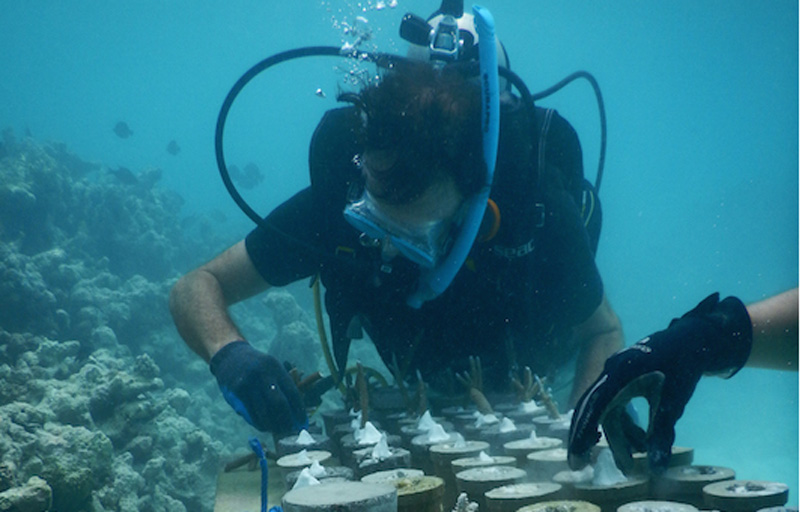 Coral propagation at the Coralarium CREDIT Fairmont Maldives Sirru Fen Fushi