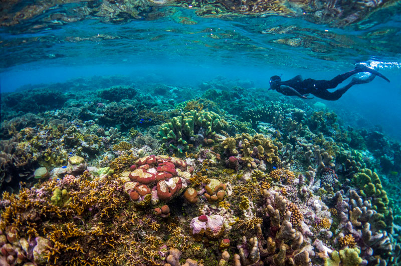 Dive beneath the surface in Solomon Islands Snorkeling at Marau Sound