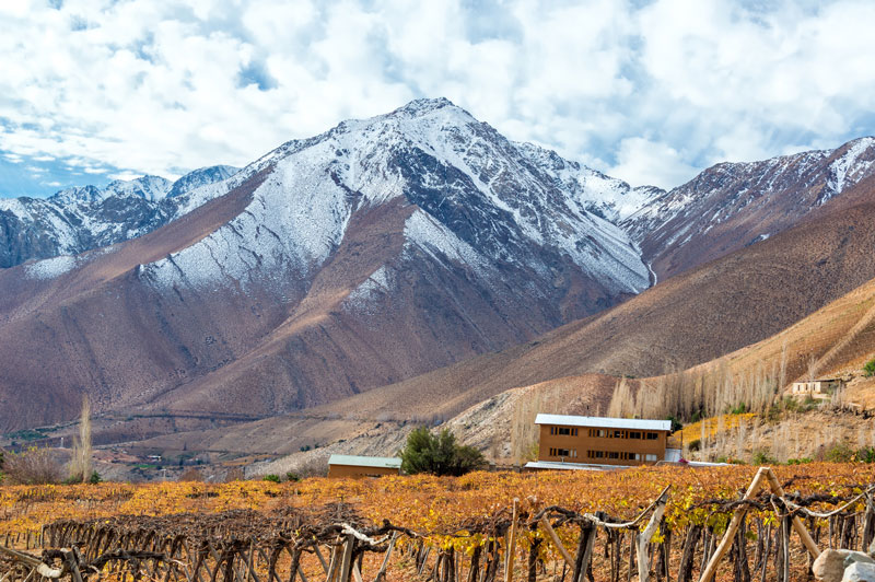 Syrah and Pisco in the Elqui Valley