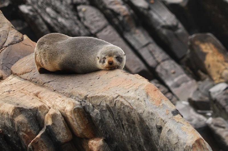 Secret Seals Tour, Kangaroo Island, Australia