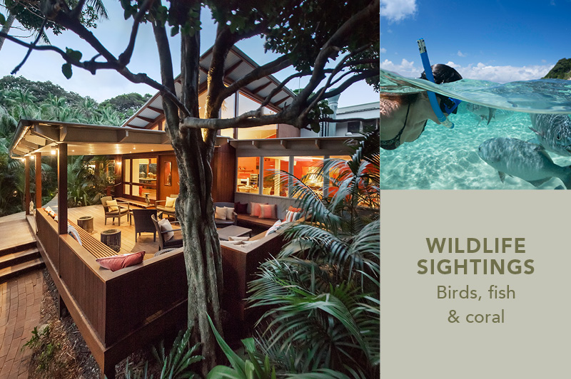 Arajilla Retreat, Lord Howe Island