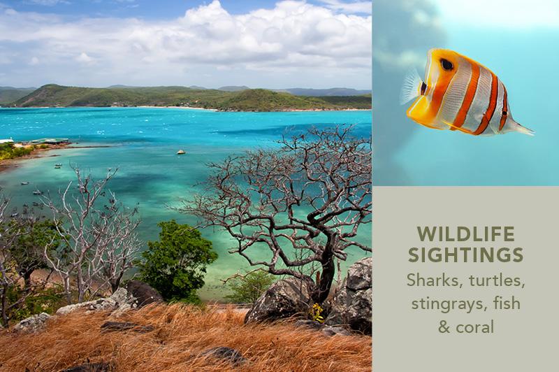 Torres Strait Islands & the Remote Reef, QLD