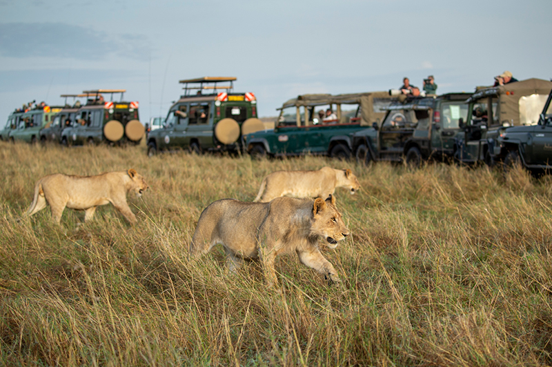 Safari in Serengeti National Park