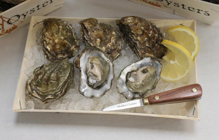 Maldon Oyster