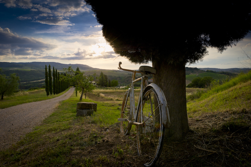 Bicycle in wine region