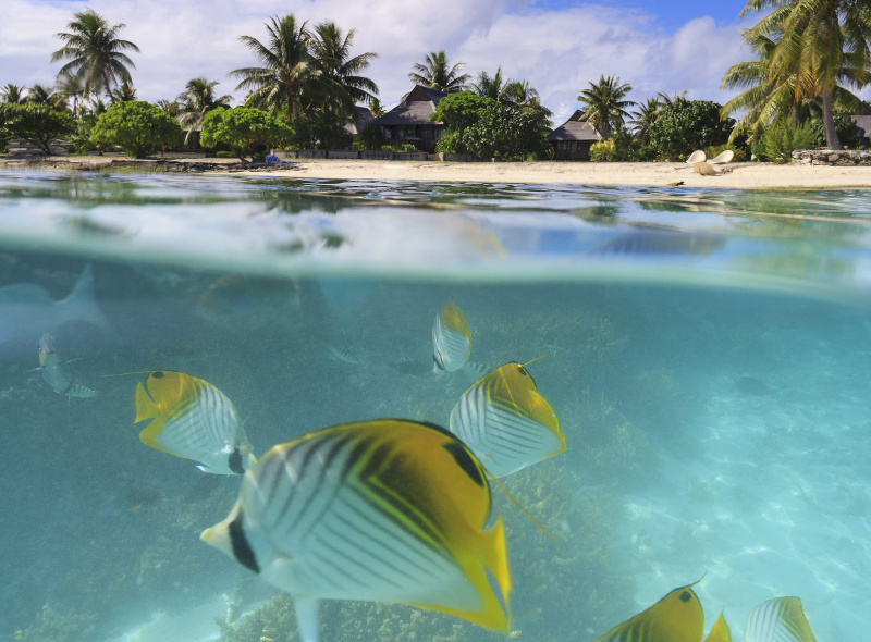 Fish swimming in turquoise Tahitian water