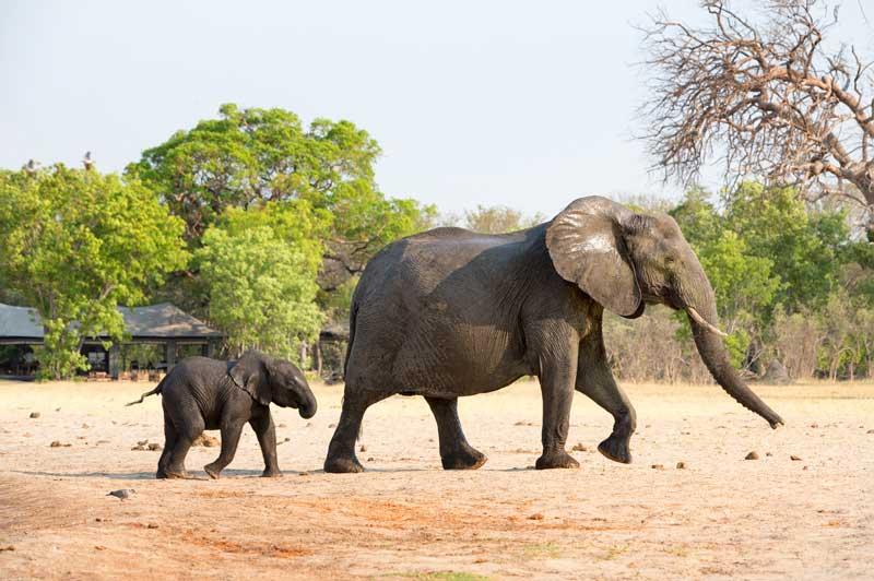 Elephant Camp in Zimbabwe