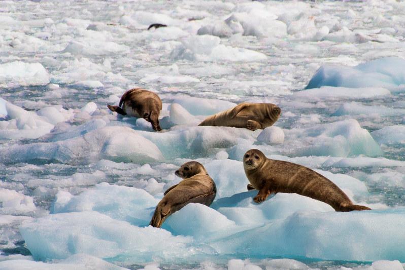 Travel Associates hubbard glacier