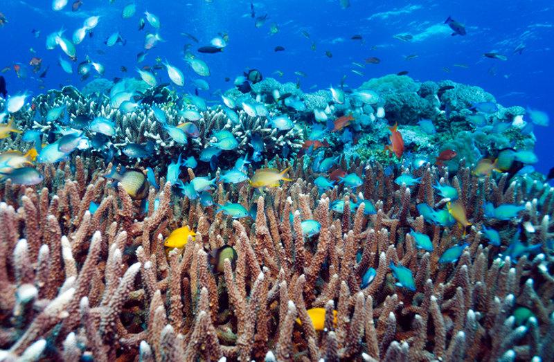 Snorkelling Lombok