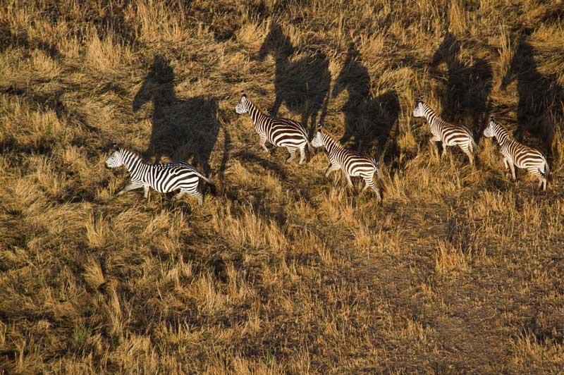 Air Safari over Masai Mara National Reserve