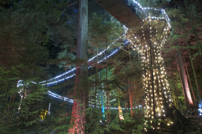The Capilano Canyon Lights