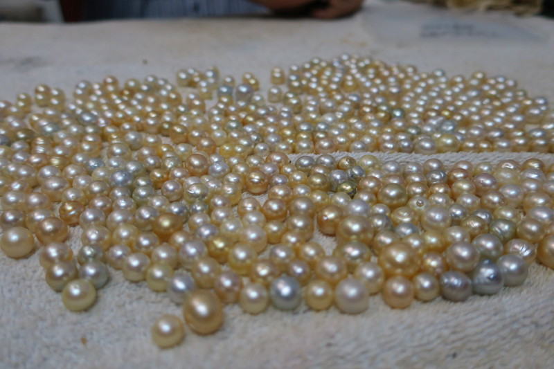 Gold Pearls Papua New Guinea