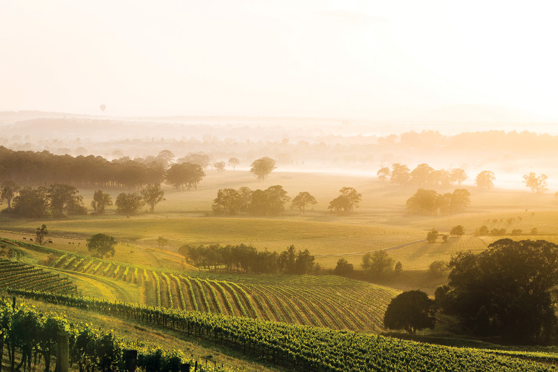 Hunter Valley, site of yearly wine festival