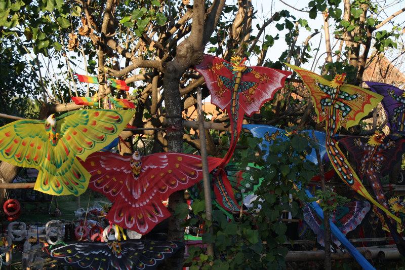 Kites in Bali