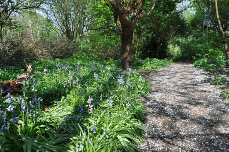 Moseley Bog (image courtesy of Ashley Dace)