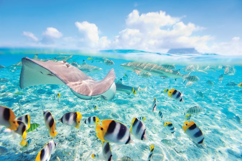 Marine life snorkel Tahiti
