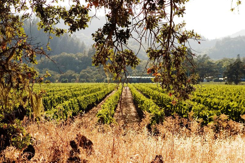 The Napa Valley California