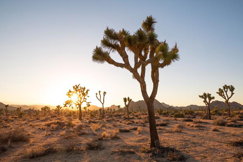 Joshua Tree National Park, Greater Palm Springs
